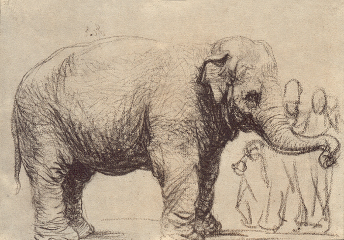 http://www.rembrandtpainting.net/rmbrndt_selected_drawings/drawing_images/elephant.jpg